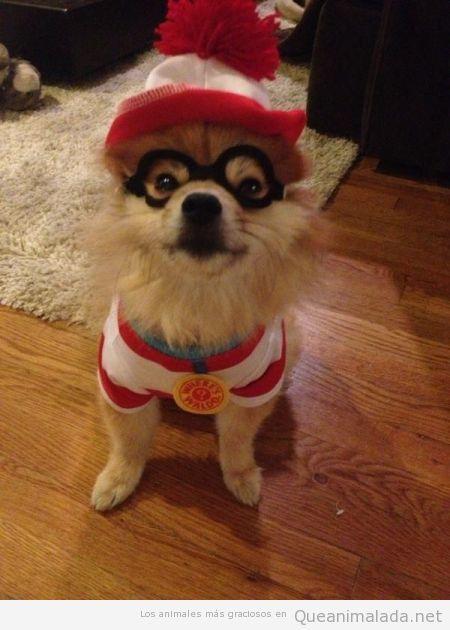 Perro disfrazado en Halloween de Donde está Wally