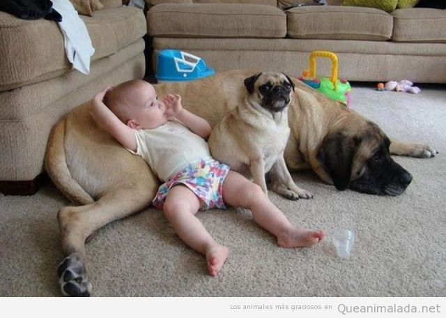 Foto graciosa de bebé que tiene a su perro como sofá