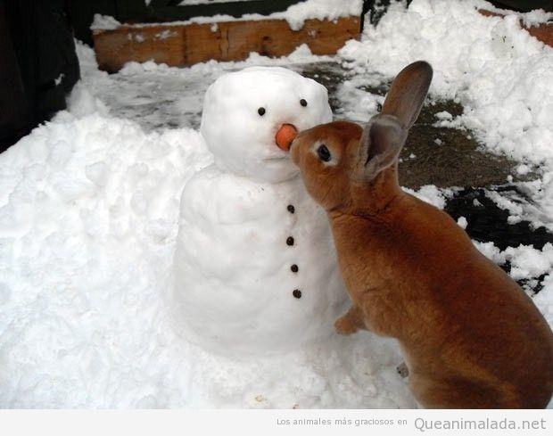 Foto graciosa de un conejo comiéndose la zanahoria de la nariz del muñeco de nieve