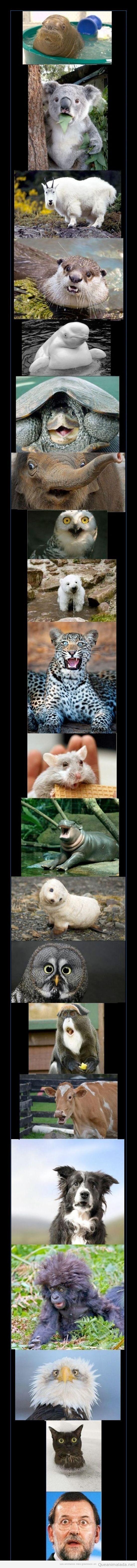 Fotos graciosas de animales con caras de sorpresa