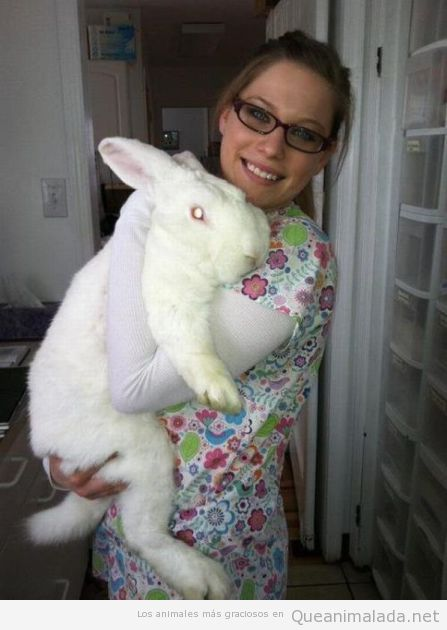 Imagen chistosa de un conejo enorme