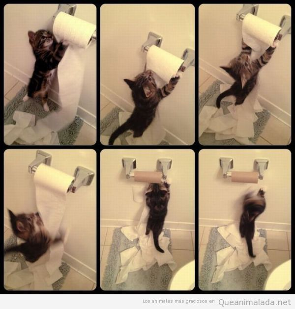 Fotos graciosas de un gato pequeño contra un rollo de papel de váter