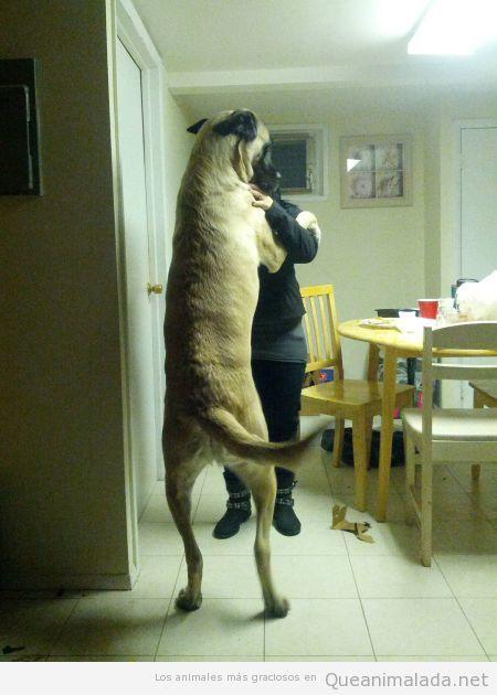 Foto divertida de un perro muy grande bailando con una mujer