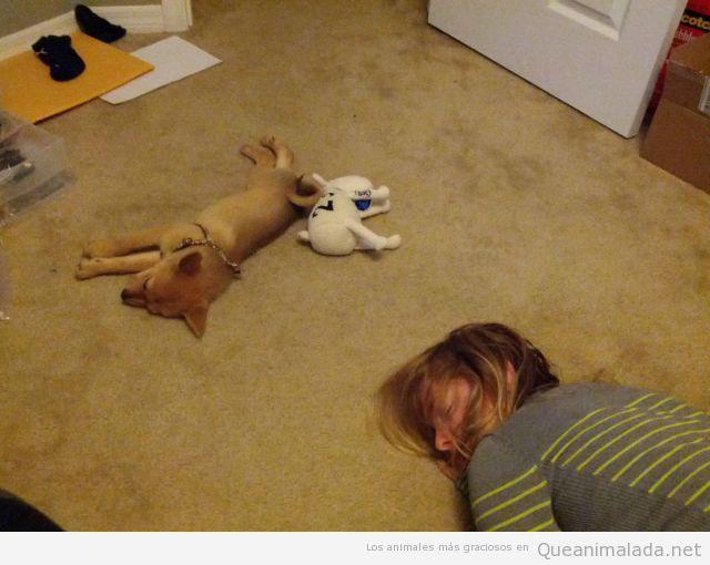 Perro, peluche y mujer durmiendo en el suelo