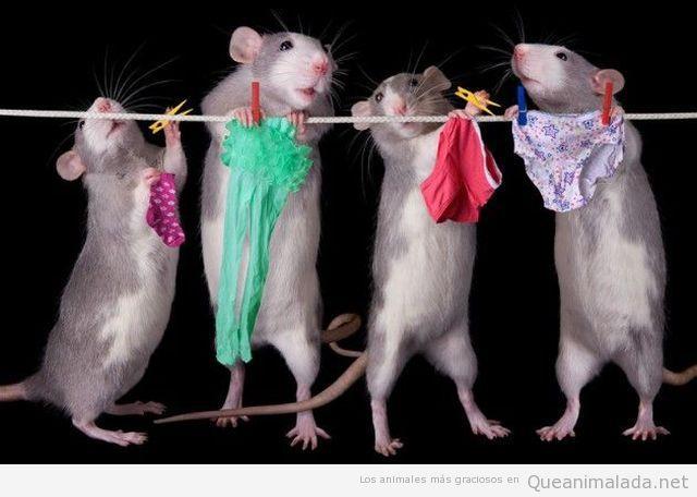 Fotos graciosas de ratonas haciendo colada ropa sexy