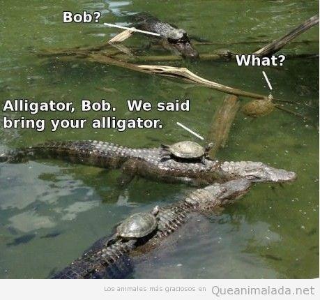 Imagen graciosa de tortugas subidas encima de cocodrilos