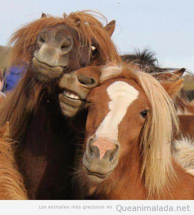 Imagen divertida de tres caballos que parecen posar para una foto como modelos