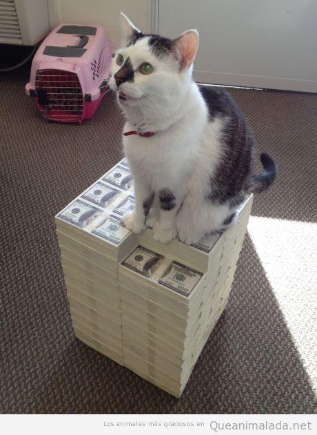 Gato mafioso subido en una montaña de billetes