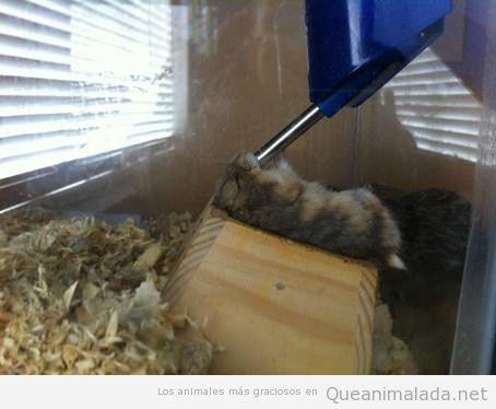 Imagen graciosa de un hamster comiendo