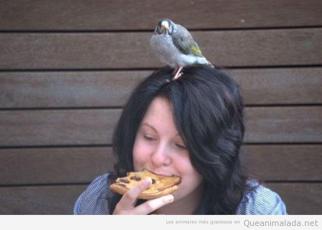 Foto graciosa de chica que come pizza en la calle con un pájaro en la cabeza
