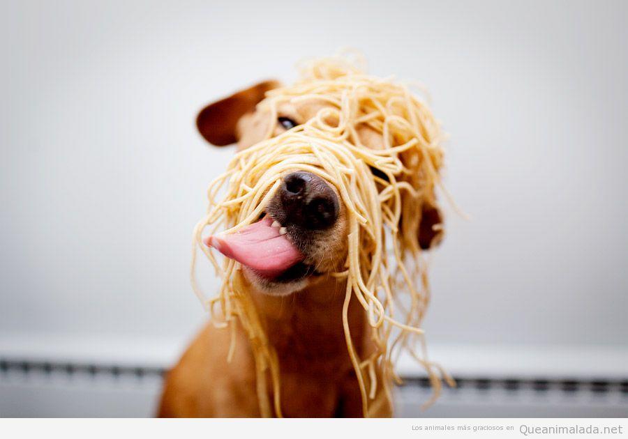 Perro gracioso con la cara llena de espaguetis