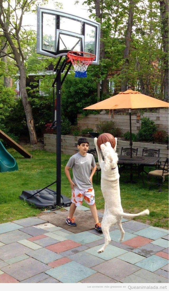 Imagen graciosa de un perro jugando a basket