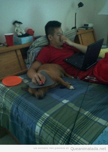 Imagen graciosa de un perro que sirve como soporte para el ratón del pc
