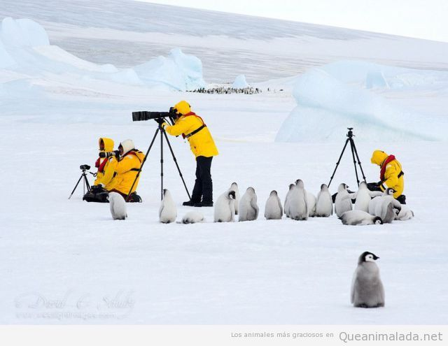 Pingüinos acompañando a los trabajadores en una expedición al polo sur