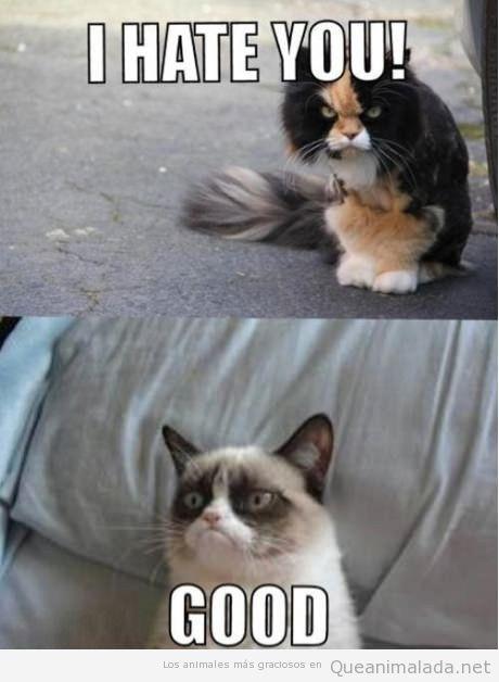 Conversación graciosa entre gatos gruñones o grumpy cats