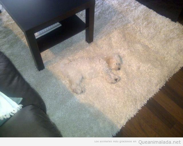 Perro gracioso blanco camuflado en una alfombra blanca