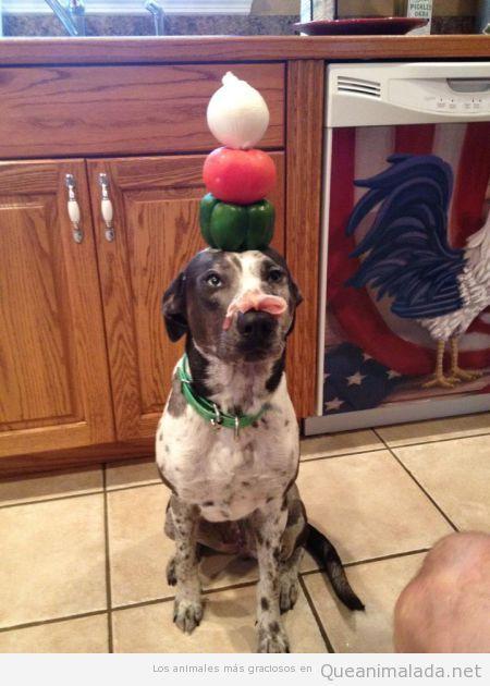 Perro gracioso con vegetales en la cabeza y bacon en el hocico