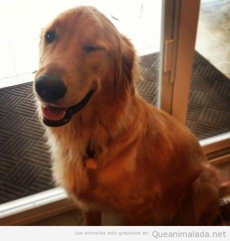 Foto graciosa de un perro ligón guiñando un ojo