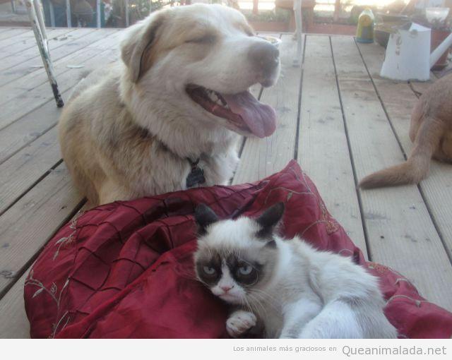 Perro feliz con gato gruñón