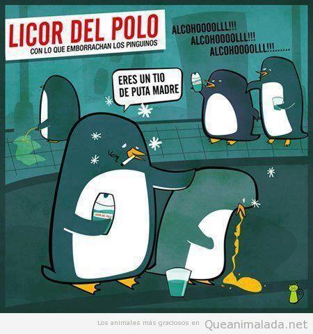 La verdad de licor del polo, pingüinos borrachos