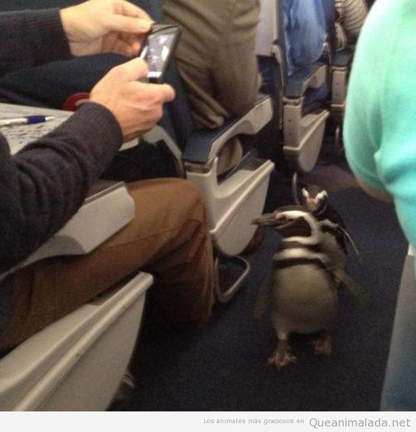 Foto graciosa de pingüinos en avión