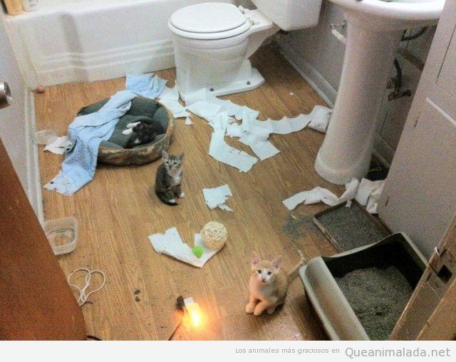 Foto graciosa de un grupo de gatos destrozando el baño