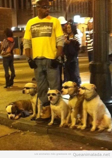 Grupo de perros con gafas de sol