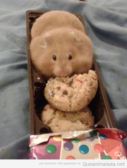 Imagen de un hamster gracioso en un paquete de galletas