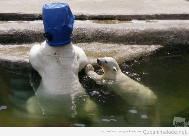 Foto WTF de un oso polaer con un bidón en la cabeza
