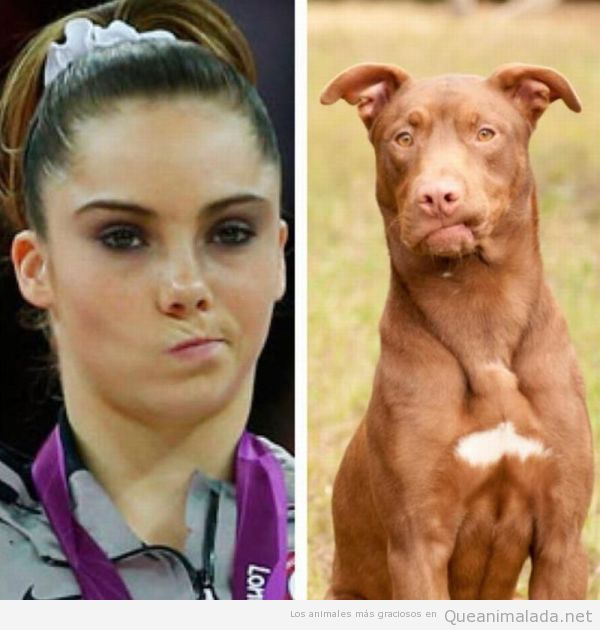 Perro is not impressed, como Mckayla Maroney