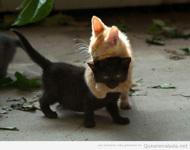 Imagen graciosa de un gato abrazando a otro