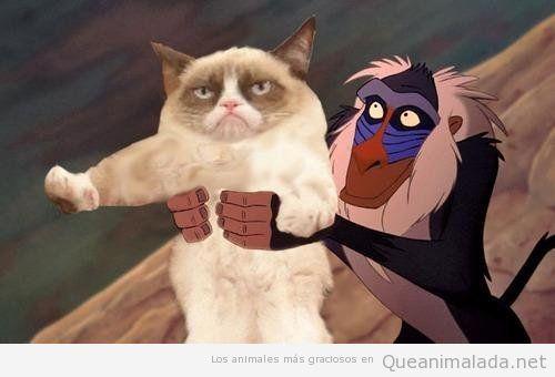 Grumpy cat o gato gruñón en El Rey León