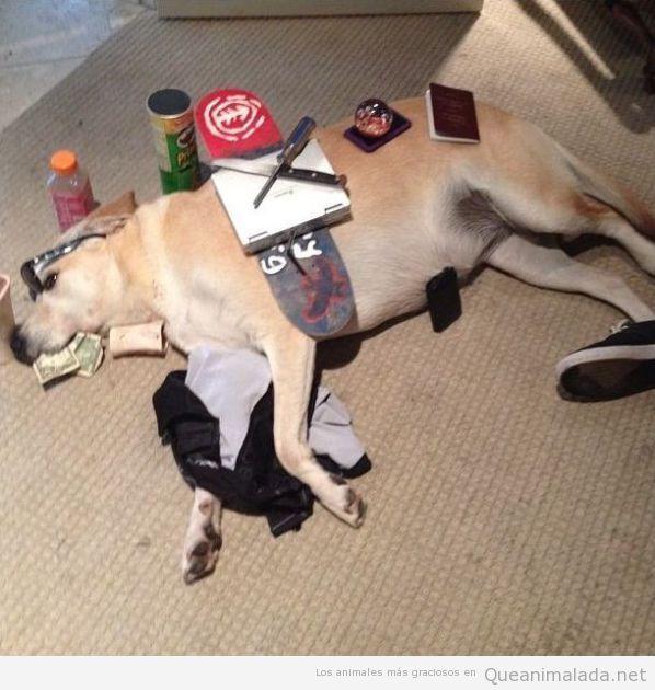 Imagen divertida de perro dormido con objetos encima