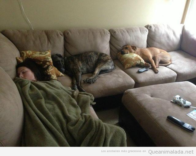 Imagen divertida de dos perros y su dueña echando siesta sofá