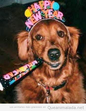Perro con diadema de Happy New Year y matasuegras