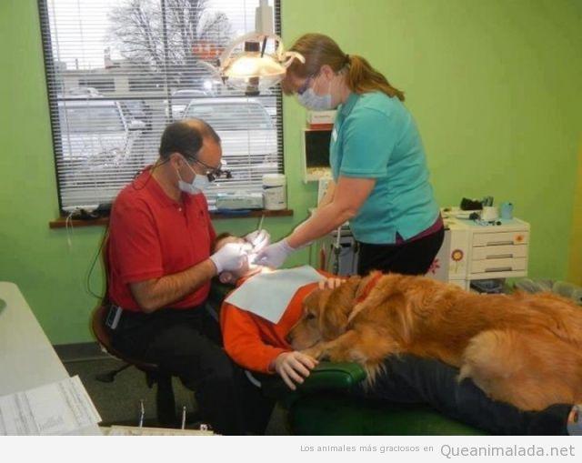 Perro acompaña al dentista a su dueño