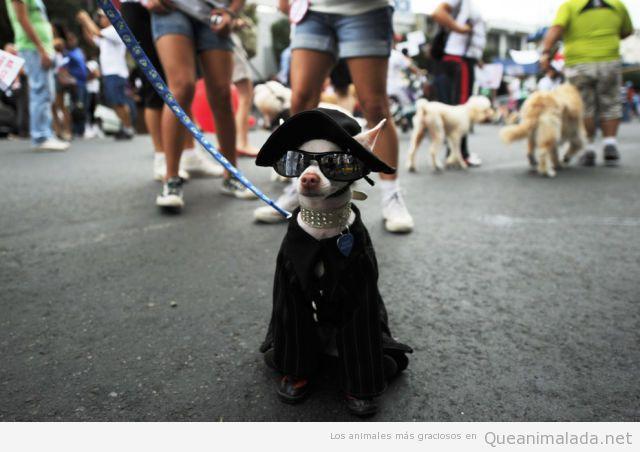 Foto graciosa de un perro con disfraz de capa
