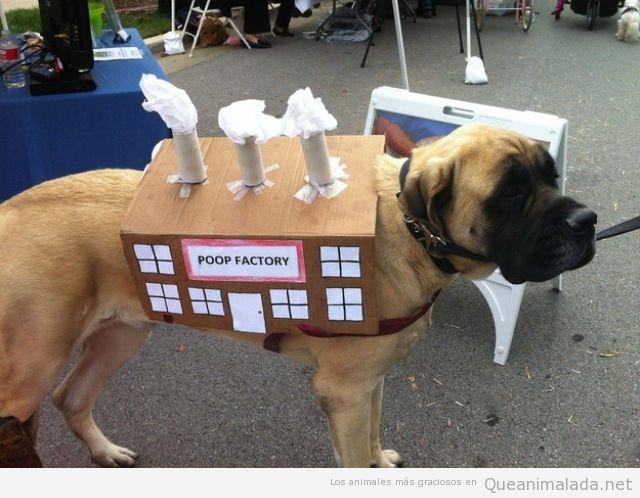 Perro disfrazado de fabrica de caca