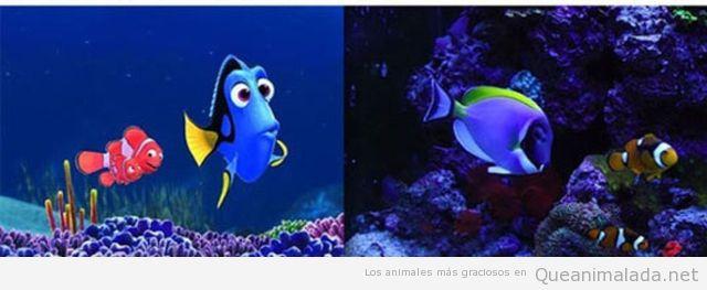 Nemo y Dory en la vida real
