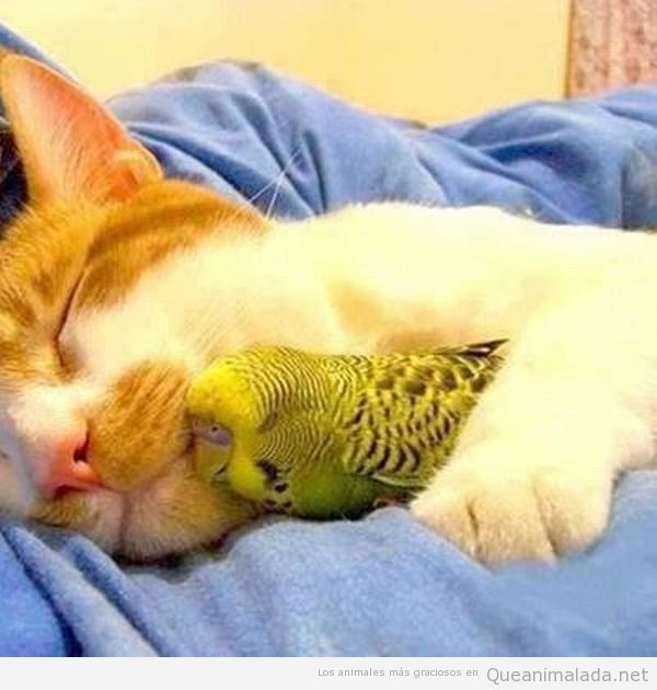 Imagen bonita de gato y periquito abrazados