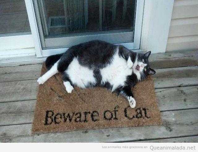 Gato gordo con un felpudo que pone Cuidado con el gato, Beware of cat