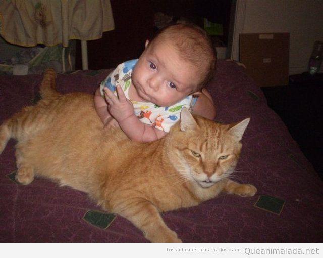 Foto divertida bebé encima gato gangster