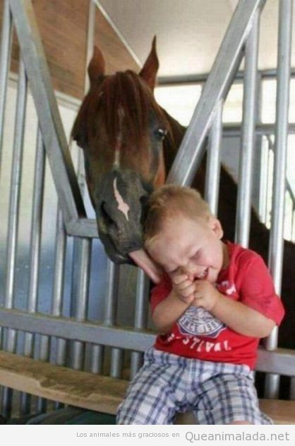 Imagen tierna de un caballo haciendo cosquillas a un niño