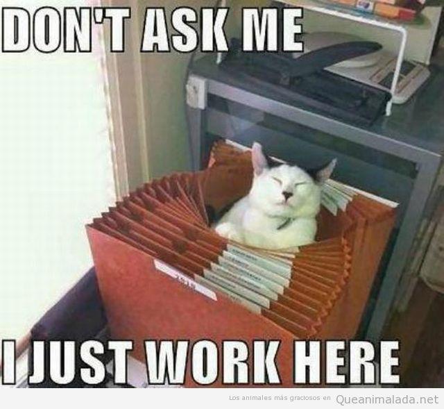 Foto graciosa de un gato dentro de un archivador