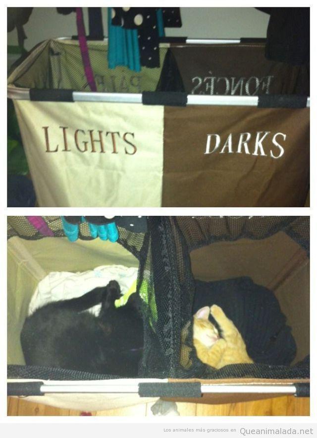 Imagen divertida de dos gatos metidos cesta ropa sucia