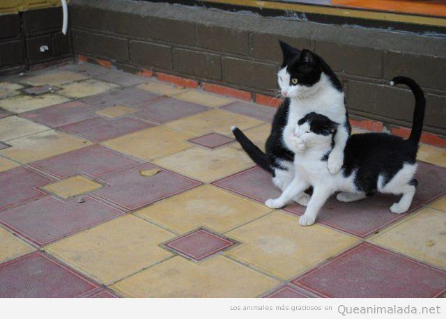 Foto graciosa de un gato poniéndole la pata a otro en la boca