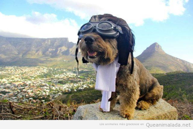 Imagen graciosa de un perro con gafas y disfraz de aviador