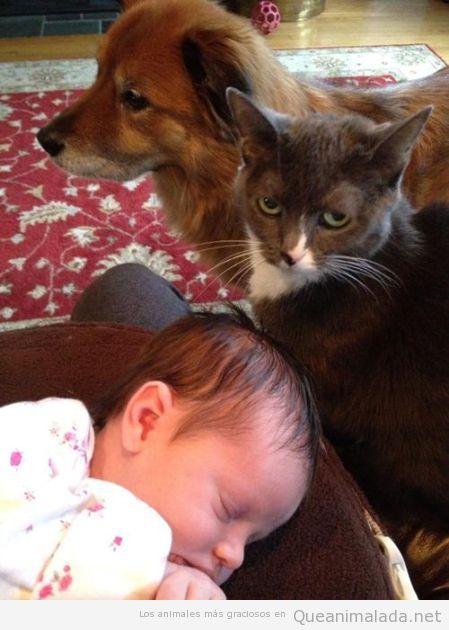Foto divertida de perro y gato cuidando y vigilando a un bebé