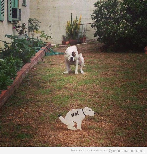 Imagen divertida de un perro haciendo caca en el jardín