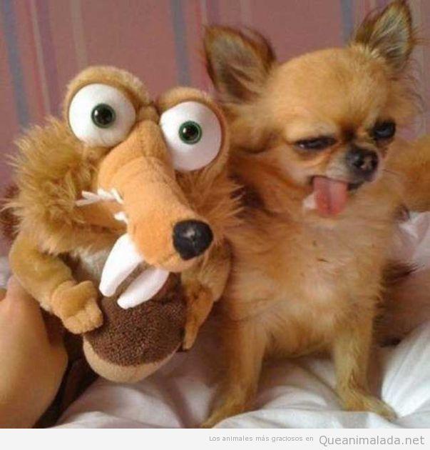 Imagen chistosa de perro que se parece al peluche Sid edad Hielo